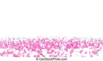 million pink sakura leaves twirly on floor isolated background