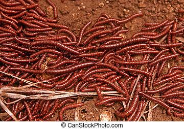 millipedes.