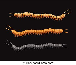 milpiés, gusanos, vector