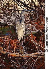 mimicry of blue heron in the foliage in autumn