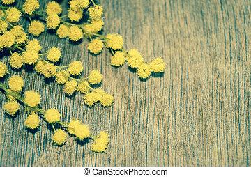 mimosa, blomningen, på, trä, bakgrund, retro designa