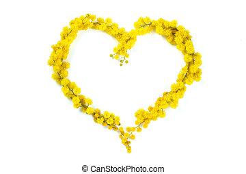 mimosa., coeur