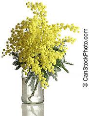 mimosa, dealbata, coupure, acacia