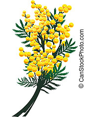 mimosa, fleurs