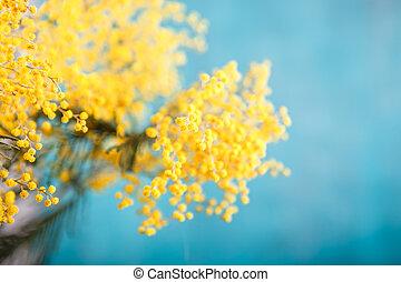Mimosa flowers bordo fiore vecchio cornice isolato for Mimosa in vaso
