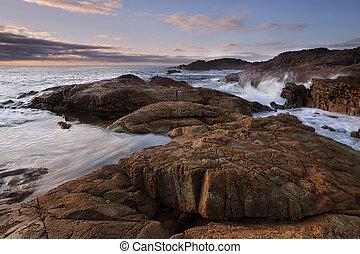 mimosa, rocas, mañana