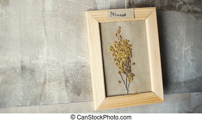 mimoza flowers in picture frame on wall interior