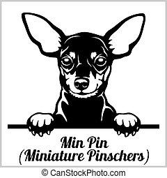 Min Pin - Peeking Dogs - breed face head isolated on white...
