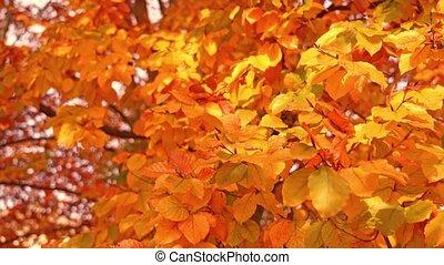 mince, branches, feuilles, arbre, rouges, doré, long, sécher