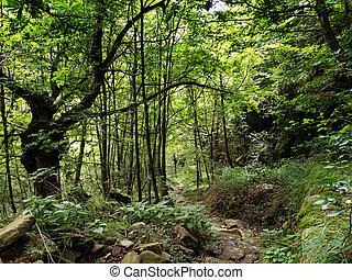 mindre, yppig, woods., -, traveled, grön, bana, genom, väg,...