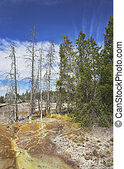Mineral waters in Yellowstone Park