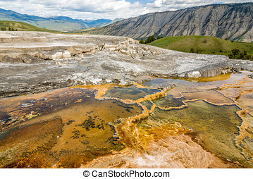 Minerva Terrace in Yellowstone N.P. - Mammoth Hot Springs -...