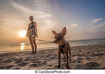 mini, pinscher, femme, plage, chien
