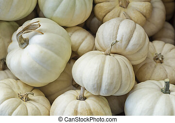 Mini Pumpkin - Pile of seasonal mini pumpkins at local...