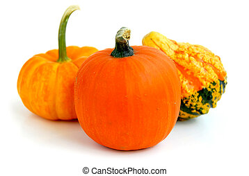 Mini pumpkin - Three mini pumpkins on white background