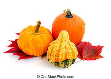 Mini pumpkins - Mini pumkins with autumn leaves on white ...