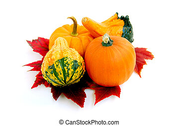 Mini pumpkins - Mini pumkins with autumn leaves on white...