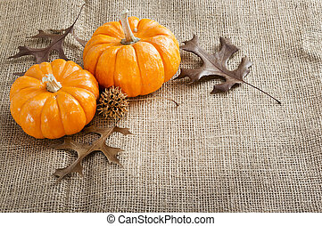 Mini pumpkins. - Orange mini pumpkins on the brown burlap .