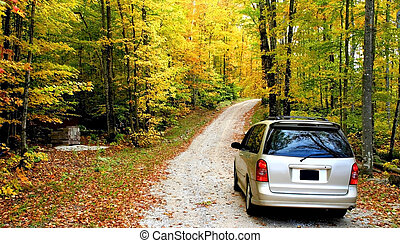 Mini Van - Scenic walk way in a park during autumn time