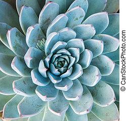 miniatura, soczysty, rośliny