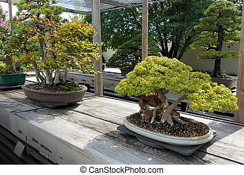Miniature Bonsai tree - Bonsai and Penjing landscape with...