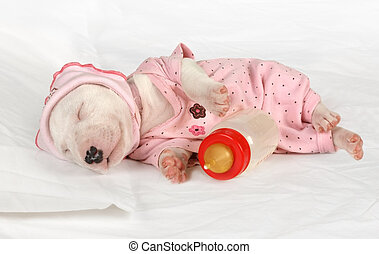 Miniature Bull Terrier puppy sleeping in the crib