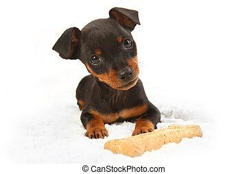 Miniature Doberman Toy Pincher Puppy Dog - Adorable...