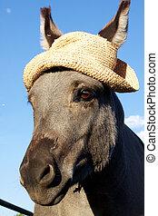 Miniature Donkey Portait with Hat - a cute miniature donkey ...