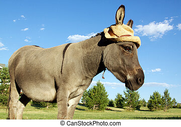 Miniature Donkey With Hat - a cute miniature donkey sporting...