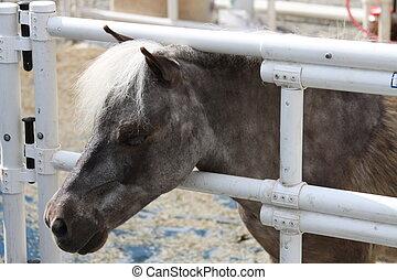 Miniature Horse - Miniature horse at the farm on a sunny...