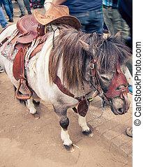 miniature horse - Miniature horse at the feria de mataderos...