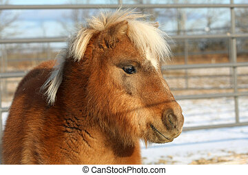 Miniature Horse - Miniature horse head shot close-up in sun