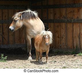 Miniature Horse & Norwegian Fjord Horse standing in shelter