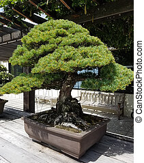 Miniature Juniper Bonsai - Bonsai and Penjing landscape with...
