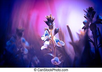 miniature, lumière, fleur, rose, pourpre
