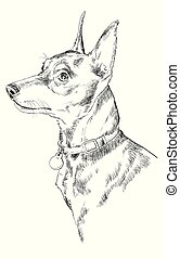 Miniature Pinscher vector hand drawing portrait - Miniature...
