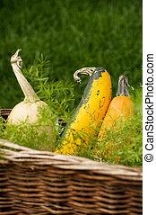 Miniature pumpkins in basket