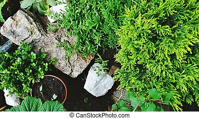 Miniature Rock garden