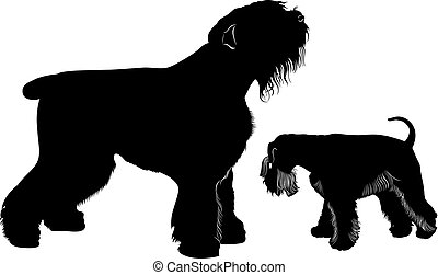 miniature schnauzer and black Terrier