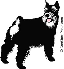 schnauzer illustrations and clipart 553 schnauzer royalty free rh canstockphoto com schnauzer clipart free schnauzer clippers