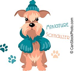 Miniature Schnauzer dog in winter hat and scarf