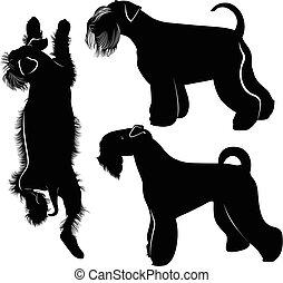 Miniature Schnauzer dogs - miniature schnauzer