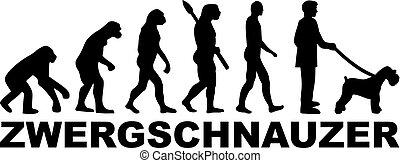 Miniature Schnauzer evolution word german - Miniature...