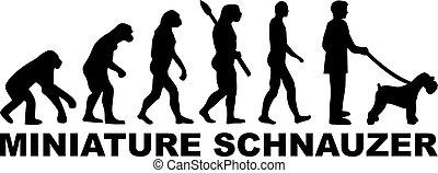 Miniature Schnauzer evolution word - Miniature Schnauzer...