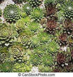 miniature succulent plants close up
