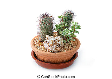 Miniature succulent plants in clay pot