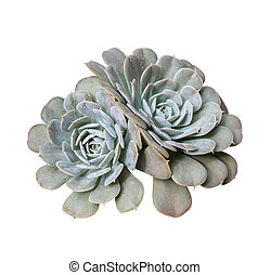 Miniature succulent plants in garden