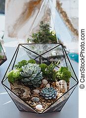 Miniature Succulent Plants.