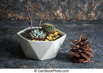 Miniature Succulent Plants on Blue Wooden Background
