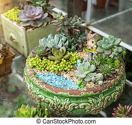 miniature, succulent, usines